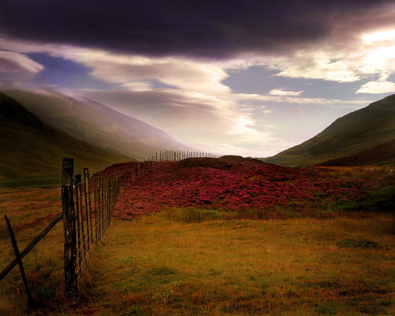 World_Scotland_Scottish_Heather_007815_