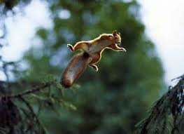 Island Blog 23 - Flying Squirrel - funny-pictures-feedio.net